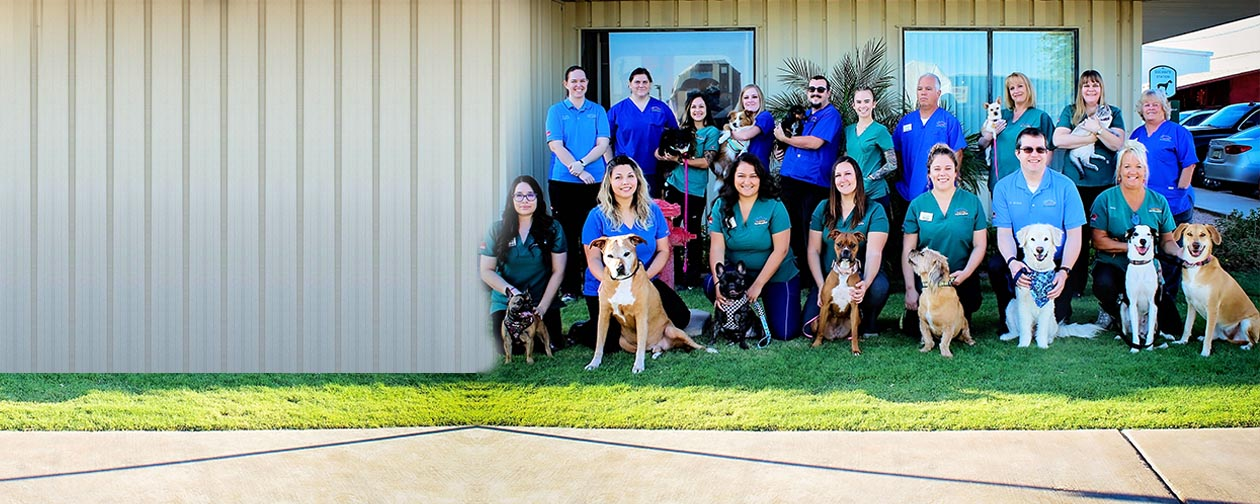 Veterinary Animal Hospital Fort Mohave - About Us